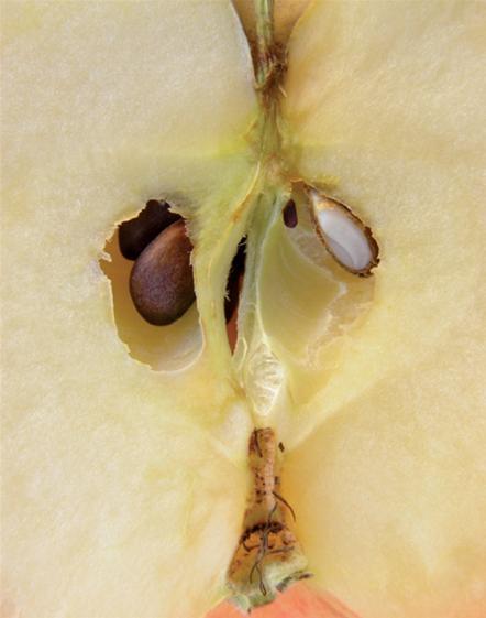 Eplet og dets skjønnhetsskatter