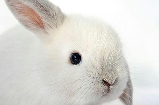 animal-testing-bunny