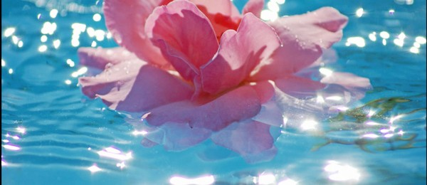 rose-in-water-wallpaper-16