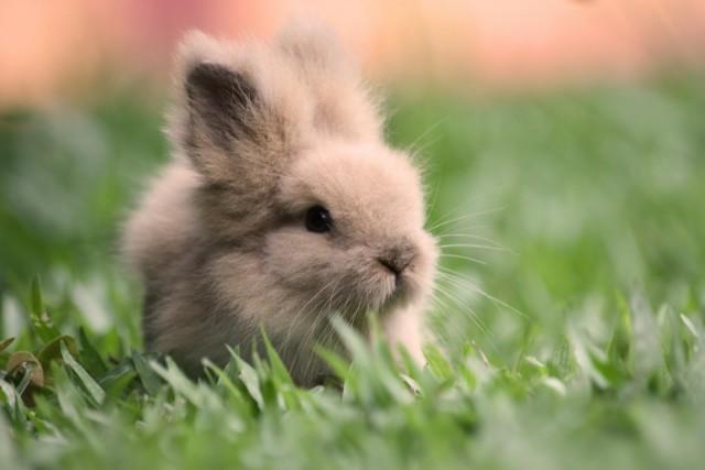 Økologisk hudpleie er dyrevennlig hudpleie.