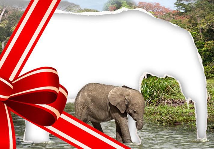 WWF juleaksjon